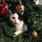 クリスマスツリー撤去事件!