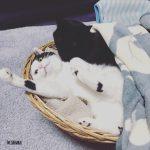 猫との暮らし。猫と快適に暮らす日々。
