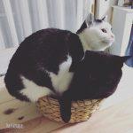 猫、君ってやつは・・・洗濯物編