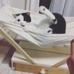 猫用ハンモックをDIY(続編)猫と暮らすインテリア