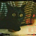 猫、君ってやつは・・・篤蔵誕生日編